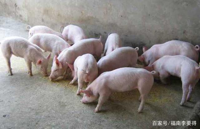 湖南绥宁新建投资4.8亿:年出栏生猪16.8万头、仔猪18.88万头项目
