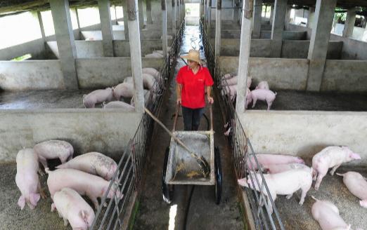 集团养猪急速扩张,中小散户只能配角儿?不慌,仍有优势
