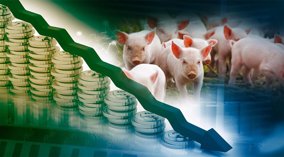 """1月20日生猪价格,北方猪价几乎""""沦陷"""",储备肉终于起作用了"""