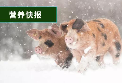 一句话总结26篇最新动物营养科研文献,快来学习一波!