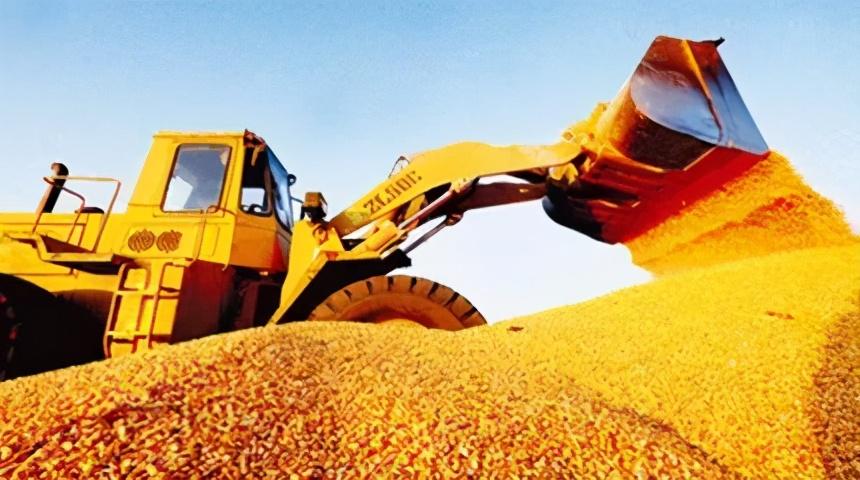 1.21饲料原料:玉米价高还买不到!豆粕暴涨是油厂坐地起价?