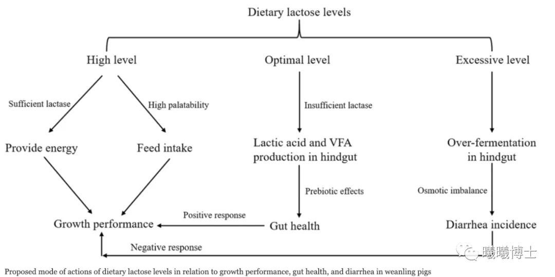 饲料中乳糖水平与断奶仔猪生长性能、肠道健康、腹泻相关的作用机制