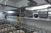 罗牛山:儋州乐满20万头生猪养殖基地正式投产