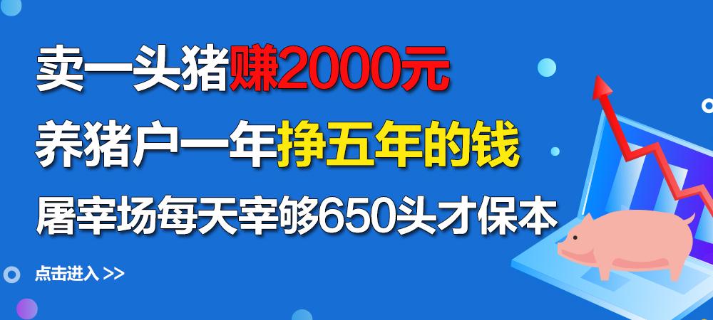 卖一头猪赚2000元,养猪户一年挣五年的钱!屠宰场每天宰够650头才保本