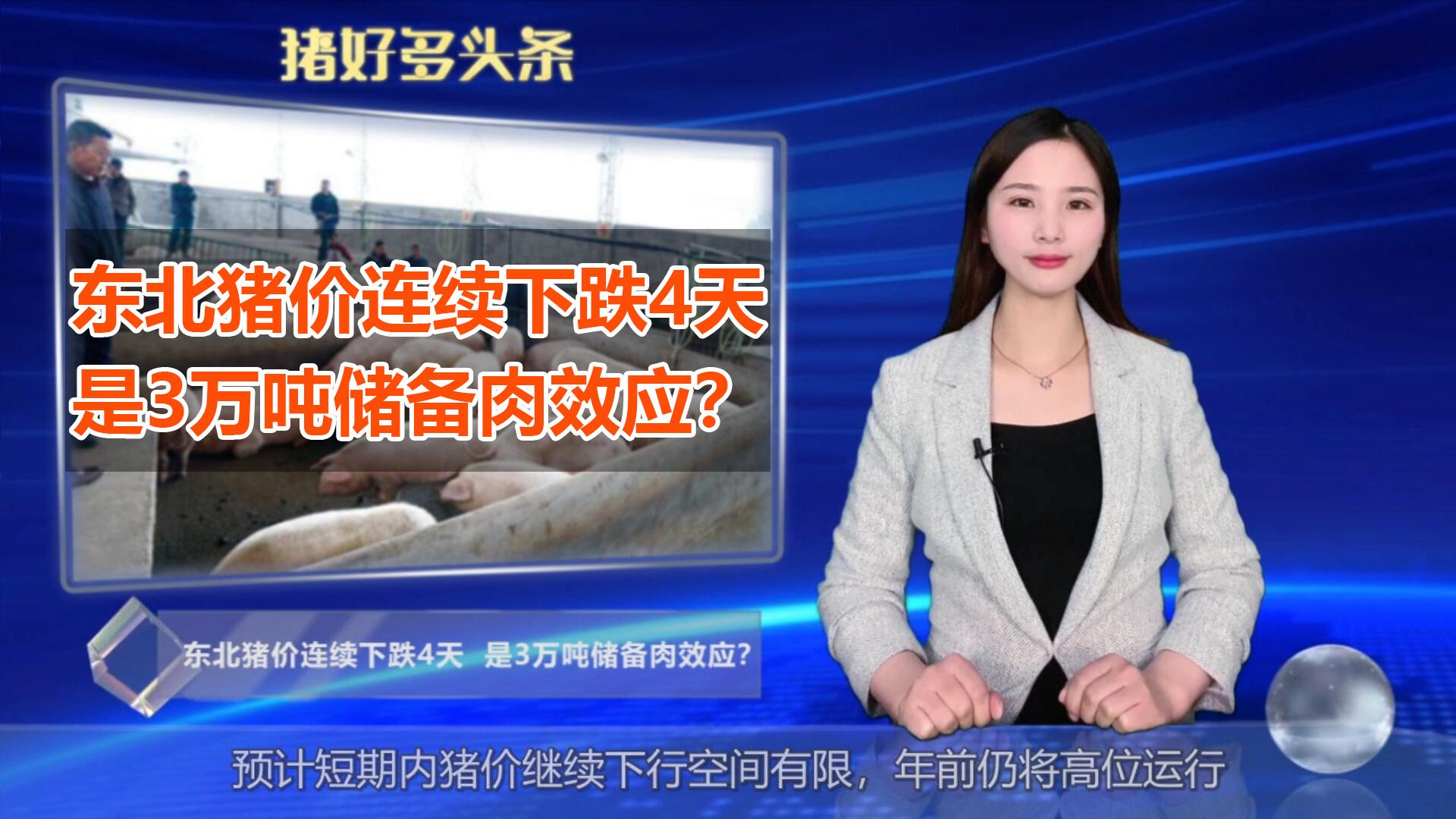 """东北猪价连续下跌4天,是3万吨储备肉效应?不得不""""顺势而为"""""""