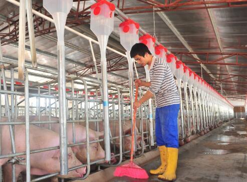 2020年江西生猪存栏1569.9万头