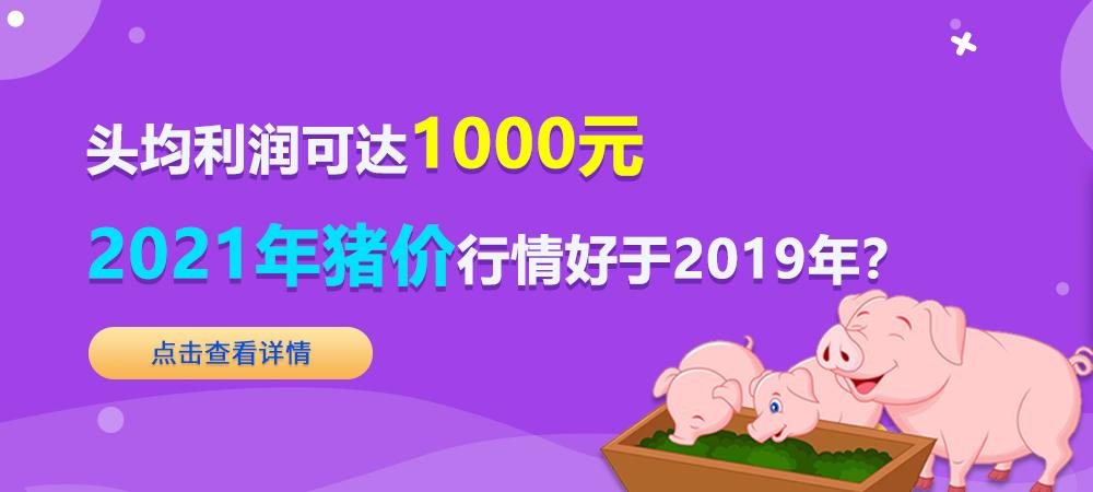 头均利润可达1000元!2021年猪价行情好于2019年?