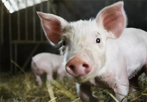 最新消息报道!中华人民共和国动物防疫法最新版公布!