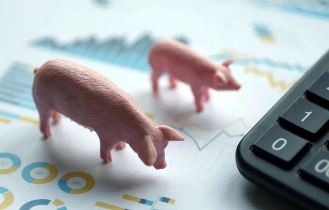 """1月25日15公斤仔猪价格,猪价现上涨苗头,仔猪行情被""""拉扯""""?"""