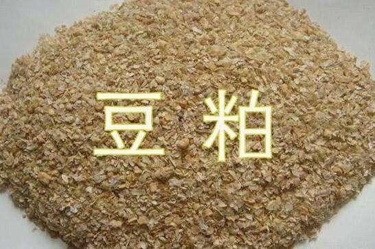 2021/22年度中国大豆进口可能超过1.1亿吨,创下历史最高纪录!