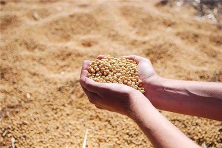 1月27日全国豆粕价格行情,豆粕涨势结束,开始高位回落?