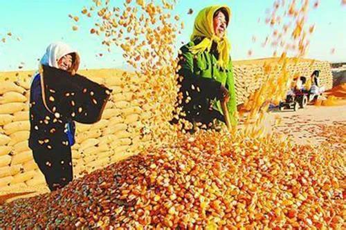 """1月27日饲料原料:豆粕""""偃旗息鼓"""",小麦回调,玉米却涨得很欢?"""