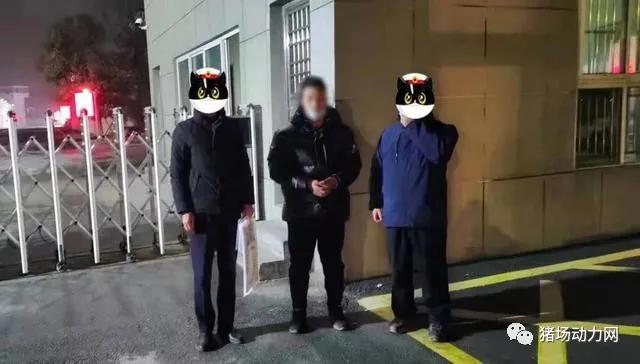 江苏宿迁两名男子空手套白狼,诈骗125头猪至山东等地销售!