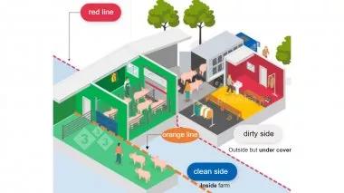 如何防止,出猪区的净区/脏区边界线的交叉污染?
