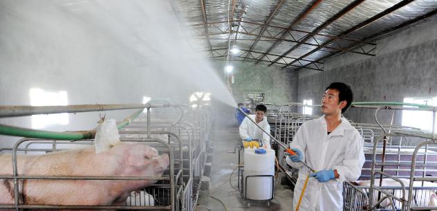 非瘟防控刻不容缓,十个预防非瘟的办法,你的猪场在用了吗?