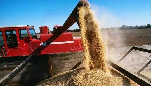 """1月28日饲料原料:玉米出现""""超涨"""",豆粕价格""""泡沫""""破碎?"""