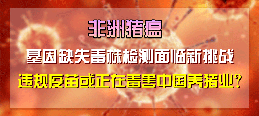 非洲猪瘟基因缺失毒株检测面临新挑战,违规疫苗或正在毒害中国养猪业?