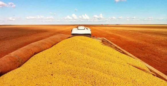 """1月29日饲料原料:玉米价格涨势""""收敛"""",大豆进口或突破1亿吨?"""
