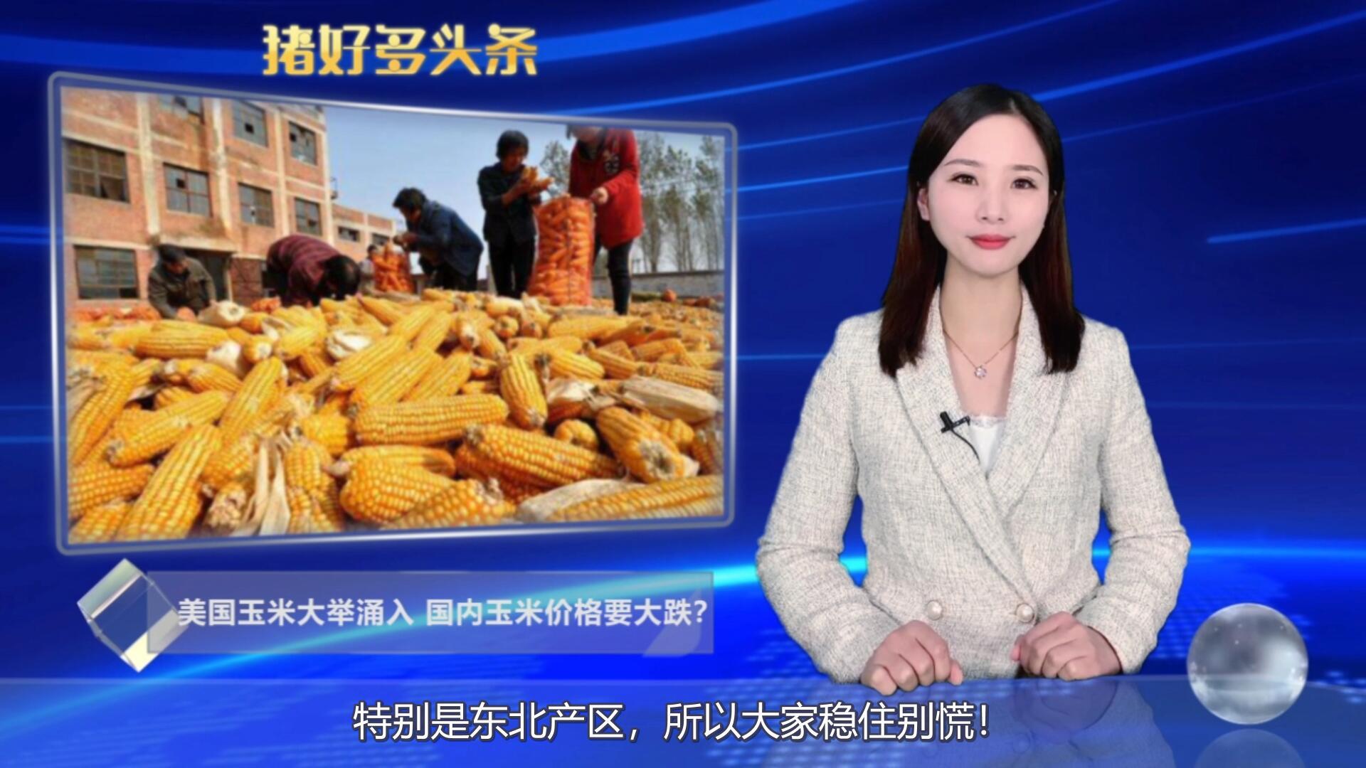 最新消息!美国玉米大举涌入,国内玉米价格要大跌?