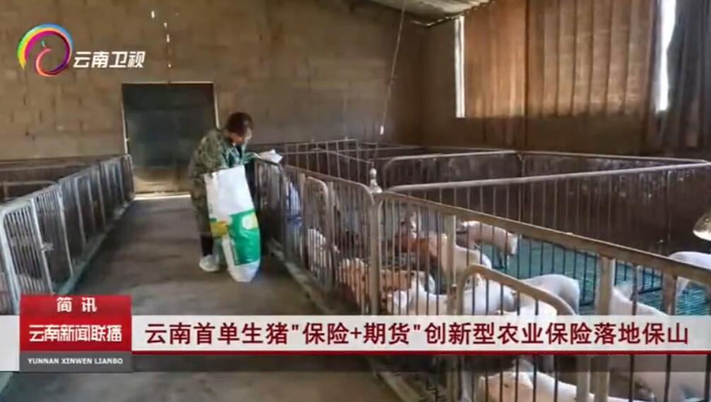 """云南首单生猪""""保险+期货""""创新型农业保险落地保山"""