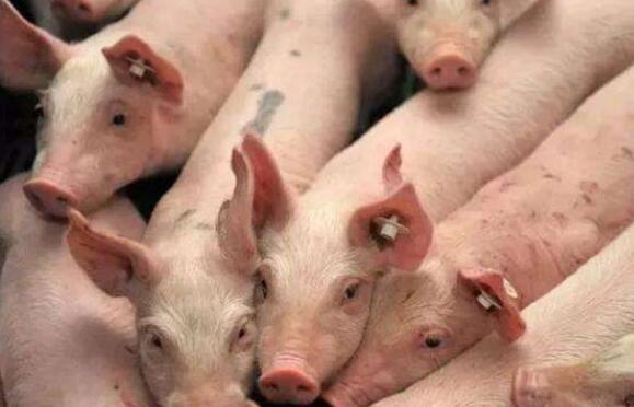 甘肃:力争2021年底生猪出栏达到1000万头