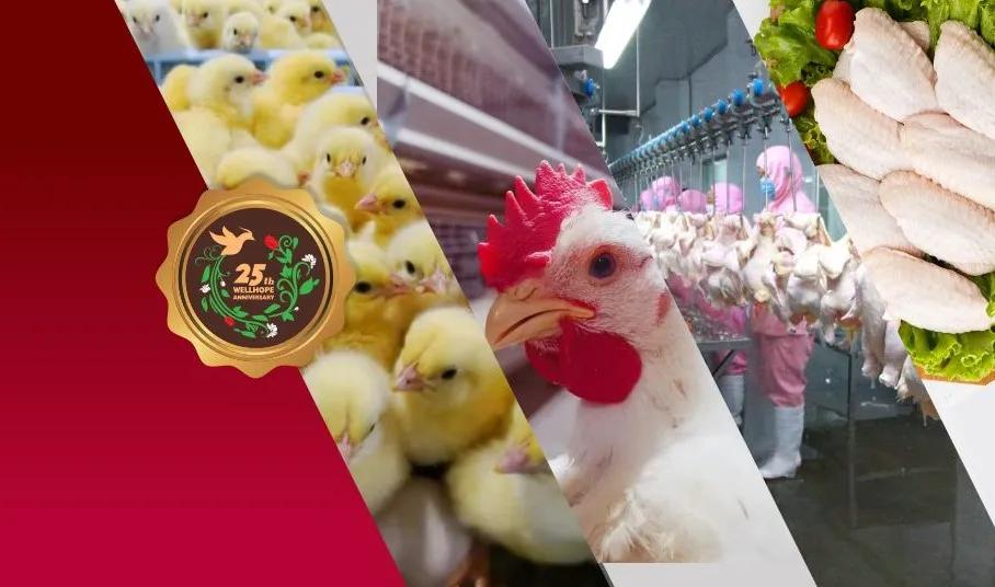 禾丰牧业拟更名 进一步向食品深加工领域发展
