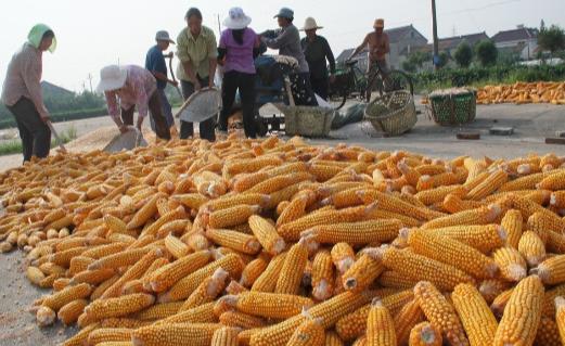 """2月2日饲料原料:进口无法填补玉米""""缺口"""",豆粕下跌风险加大"""