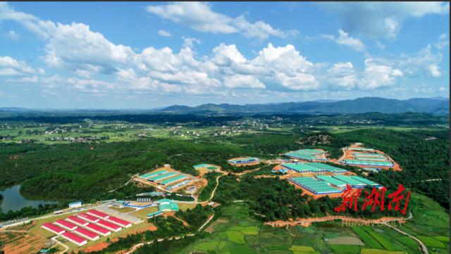 湖南:优质湘猪工程初见成效 生猪产业加快转型升级