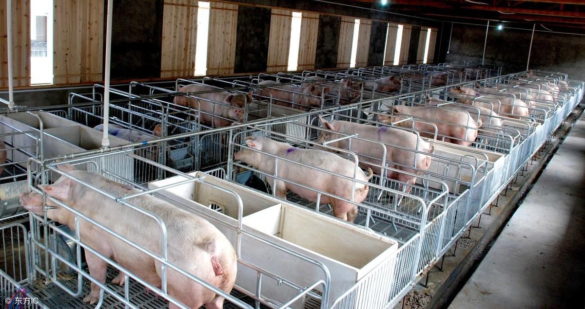发达国家的养猪新技术,猪舍的建设请对号入座