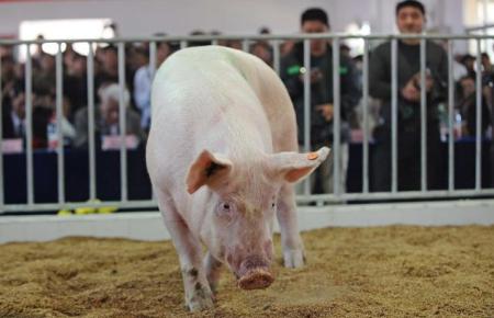 2021年02月05日全国各省市外三元生猪价格,跌跌跌!北方多地已跌破15元,节前上涨还有戏吗