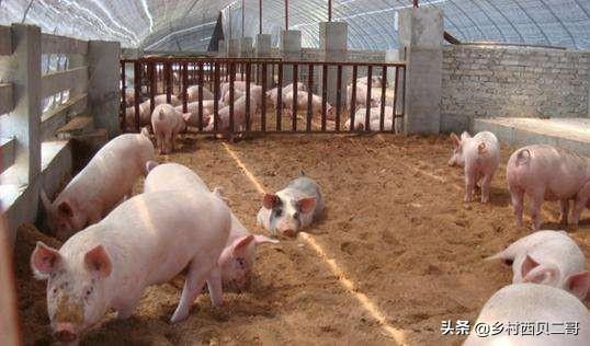 猪场生物安全与废弃物无害化处理,猪粪尿的无害化处理