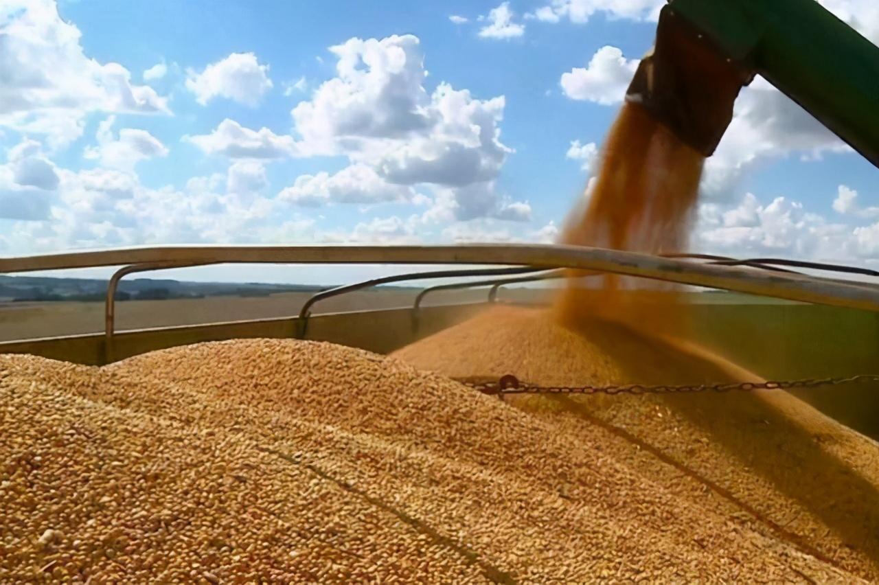 """玉米大涨""""人畜争粮""""引热议!中国真的缺粮?看养猪中的惊人浪费"""
