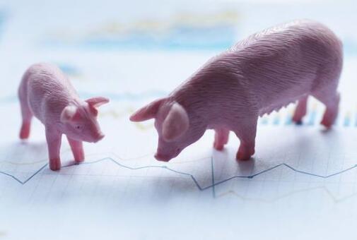 """温氏股份等龙头晒1月成绩单,猪肉价格全面下行,2021还有""""猪行情""""吗?"""