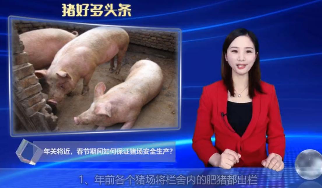 年关将近,春节期间如何保证猪场安全生产?从以下五点着手!