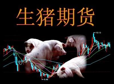 生猪期货上市满月!成交额逾1715亿元,逾1500家单位客户参与交易