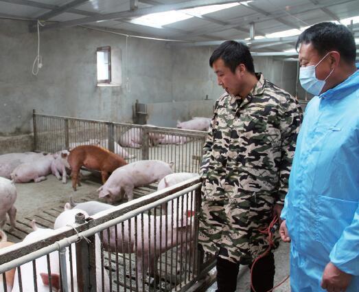 军营中走出的生猪养殖户,2020年收入了40万元!
