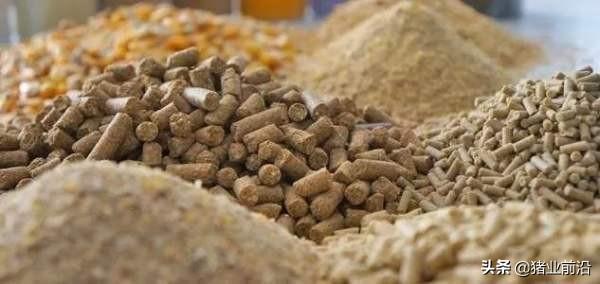 育肥猪是用浓缩料好,还是全价料好?哪个能让猪群生长速度更快?