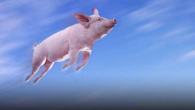 2021年02月23日全国各省市15公斤仔猪价格行情报价,现在补栏风险较大,外购仔猪尤其注意