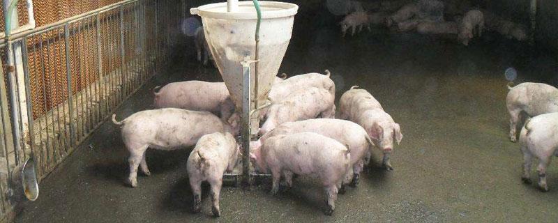 简单、科学、高效的猪饲料配方表,含前期中期及后期(全程)