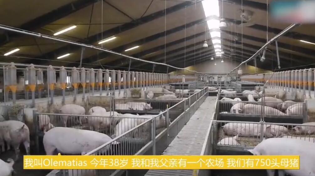 一个丹麦家庭农场:母猪存栏750头,每年生产约2.2万头仔猪!
