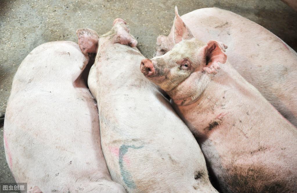 如何建设家庭猪场,及小型猪场的规划建议,快收藏!