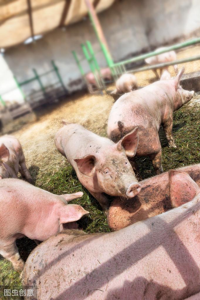 如何建设家庭猪场,及小型猪场的规划建议