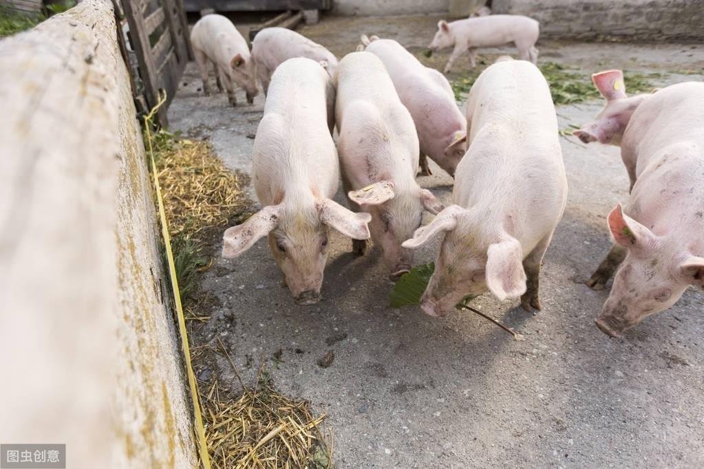 """""""万头猪场""""再发非瘟?警惕!3类猪场更容易爆发非瘟,希望没你"""