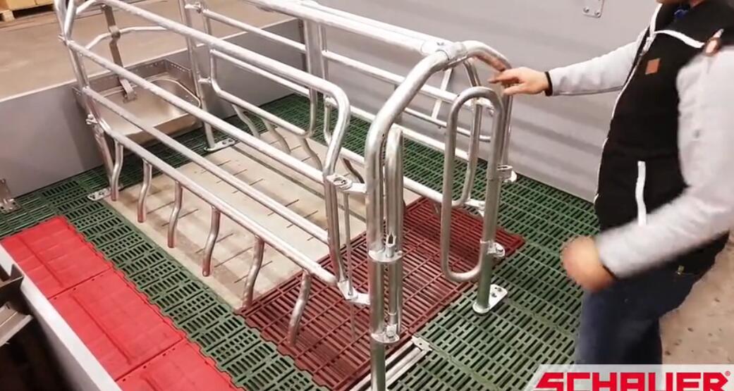看国外:自由式产床的设计,我们的产床都太不性化了!
