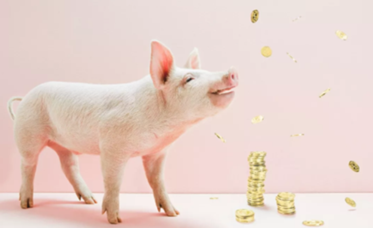 """稳产保供:吉林省首单生猪""""保险+期货""""项目赔付率高达543%"""