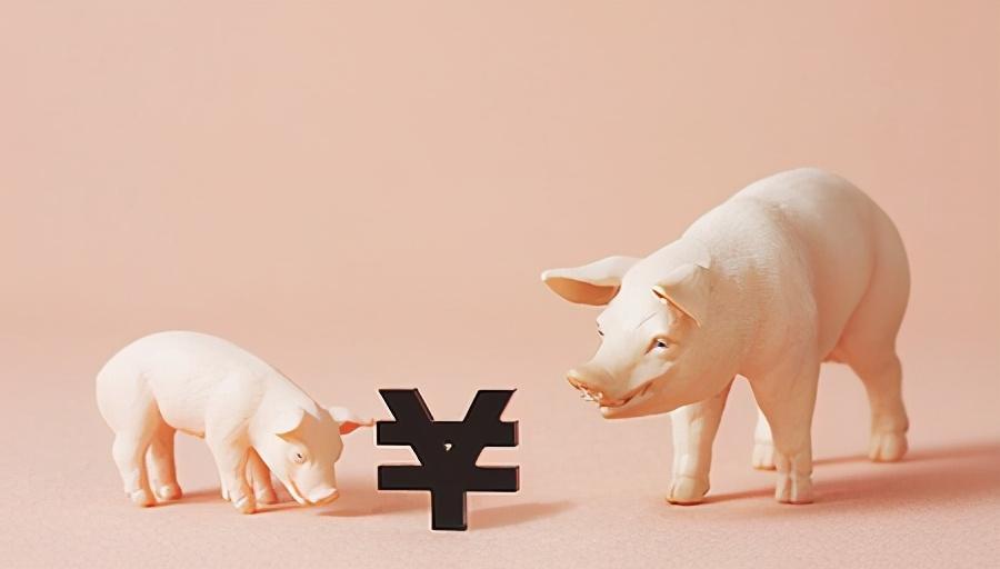 东北、华北猪价反弹!上涨信号是真是假?养殖户有发言权