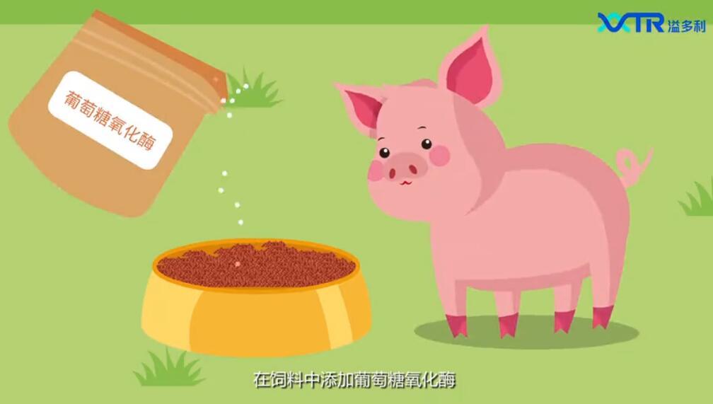 耐热升级,提升饲料品质,溢多利耐高温葡萄糖氧化酶(溢倍康S)