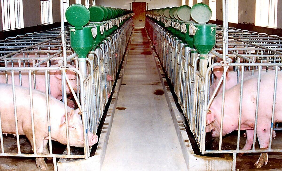 中小型猪场建设禁忌