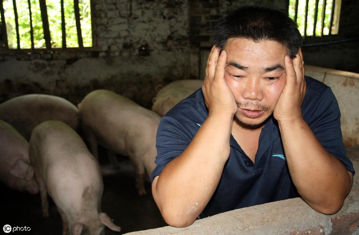 发生非瘟的猪圈空置多久才能养猪?专家给出确切答案
