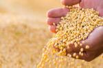 2021年02月27日全国各省市豆粕价格行情,今日国内豆粕市场价格大幅走跌,下调70-120元/吨